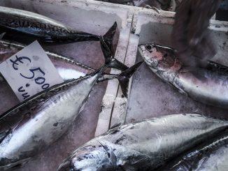 mercato-del-pesce